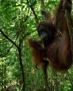 Two of Gunung Leuser's local residents.
